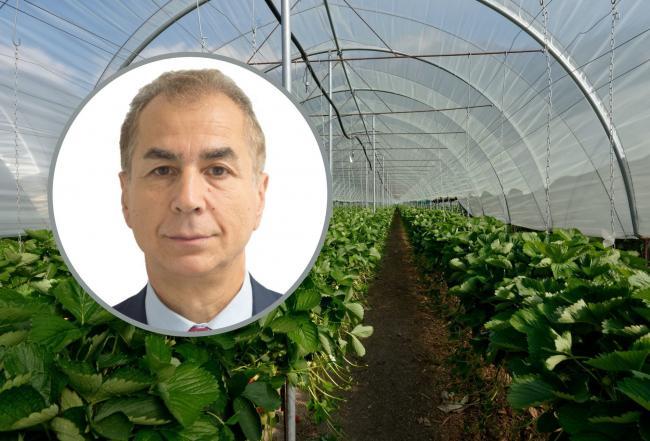 «Η Βόρεια Ουαλία πρέπει να βασιστεί στον παγκόσμιο κλάδο παραγωγής τροφίμων»